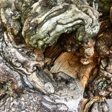 Distorted tree trunk